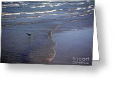 Being One With The Gulf - Vigilant Greeting Card