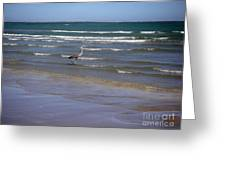 Being One With The Gulf - Wading Greeting Card