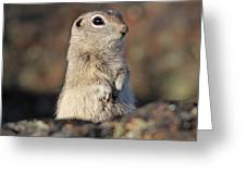 Belding Ground Squirrel Greeting Card