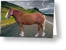 Belgian Horse Greeting Card