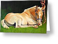 Belgian Horse Foal Greeting Card