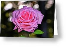 Belinda's Dream Rose 004 Greeting Card