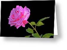 Belinda's Dream Rose 005 Greeting Card