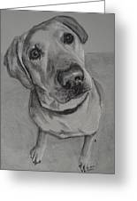 Bella Bean Labrador Retriever Greeting Card