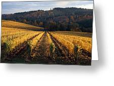 Bella Vida Vineyard 1 Greeting Card