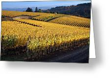 Bella Vida Vineyard 3 Greeting Card