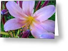 Belladonna Beauty Greeting Card