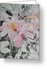 Belladonna Lilies Greeting Card