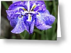 Bellevue Botanical Garden Iris 6402 Greeting Card