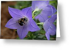 Bellflower And Bee  Greeting Card
