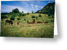 Bells And Cows Greeting Card