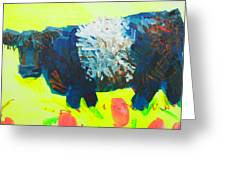 Belted Galloway Cow Looking At You Greeting Card