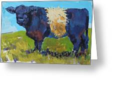 Belted Galloway Cow - The Blue Beltie Greeting Card