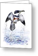 Belted Kingfisher Greeting Card by Christopher Cox