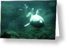 Beluga Whale 2 Greeting Card