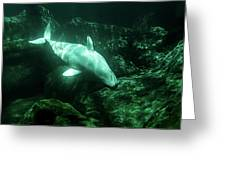 Beluga Whale 5 Greeting Card