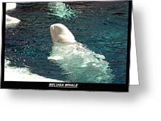 Beluga Whale Poster Greeting Card