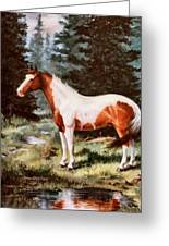 Ben Spooken Lupe    Paint Horse Greeting Card