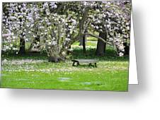 Bench Among Magnolia Greeting Card