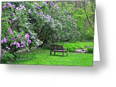 Bench In Lillacs Greeting Card