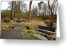 Bench In Polkemmet Park. Greeting Card