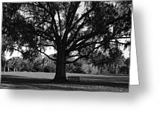Bench Under Oak Greeting Card