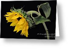 Bending Sunflower Greeting Card