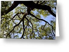 Beneath The Oak Greeting Card
