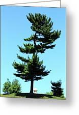 Beneath This Tree Lies Robert Edwin Peary Greeting Card