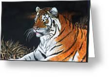 Bengal Boy  Sold Greeting Card