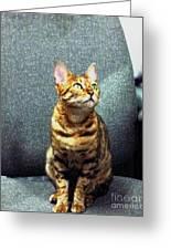 Bengal Cat Oil Pastel  Greeting Card