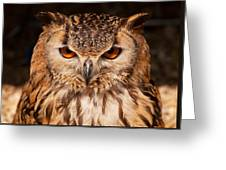 Bengal Owl Greeting Card