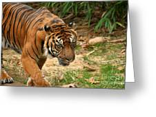 Bengal Tiger II Greeting Card
