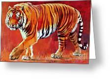 Bengal Tiger  Greeting Card by Mark Adlington
