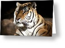 Bengal Tiger Sitting In Silent Shadows Greeting Card