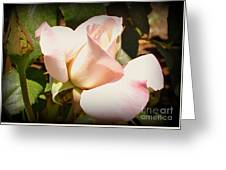 Benicia Pink 2 Greeting Card
