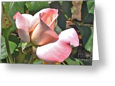 Benicia Pink 3 Greeting Card