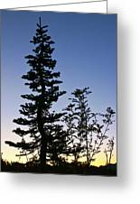 Bent Conifer Greeting Card