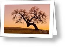 Bent Oak Greeting Card