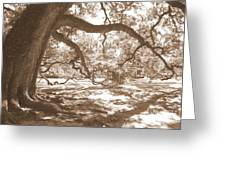 Bent Tree Greeting Card