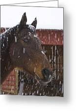Bentley In The Snow Greeting Card