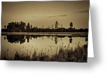 Bentley Pond Pines In Sepia Greeting Card