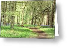 Bentley Woods, Warwickshire #landscape Greeting Card