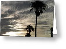Bermuda Palms Greeting Card