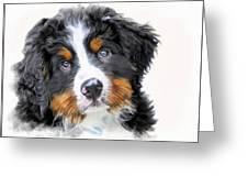 Berner-sennenhund Greeting Card
