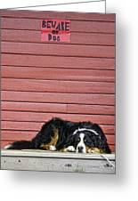 Bernese Mountain Dog Alertly Guarding Home. Greeting Card