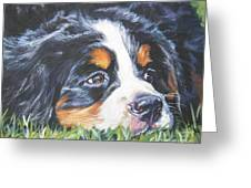 Bernese Mountain Dog In Grass Greeting Card