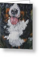 Bernese Mountain Dog Standing Greeting Card