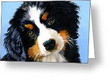 Bernese Mountain Puppy Greeting Card