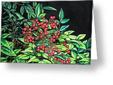 Berries - Pyracantha Greeting Card